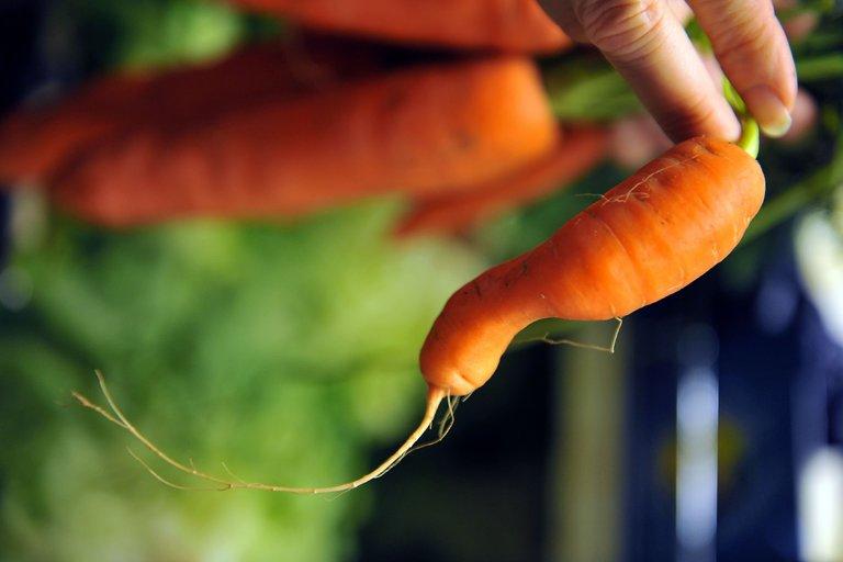 Vitamino A gausu morkose (nuotr. SCANPIX) (nuotr. Balsas.lt)