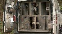 Klaipėdos miške aptiko ispanų mikroautobusą su krūva veislinių šunų (nuotr. stop kadras)