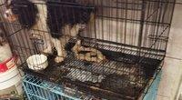 Ieškodama savo šuns moteris aptiko nelegalią veisyklą (nuotr. stop kadras)