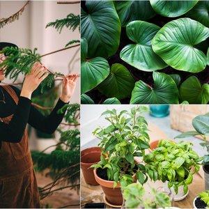 Ragina neišmesti senų augalų – specialistė patarė, ką su jais daryti