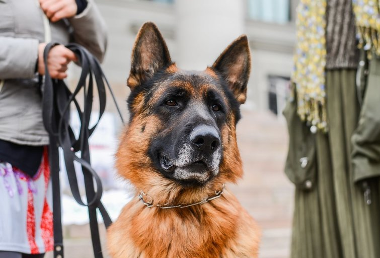 Šuo (nuotr. Fotodiena/Katažyna Polubinska)