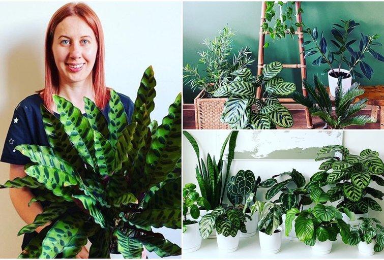 Jurgita augina 80 įvairių augalų  (tv3.lt fotomontažas)