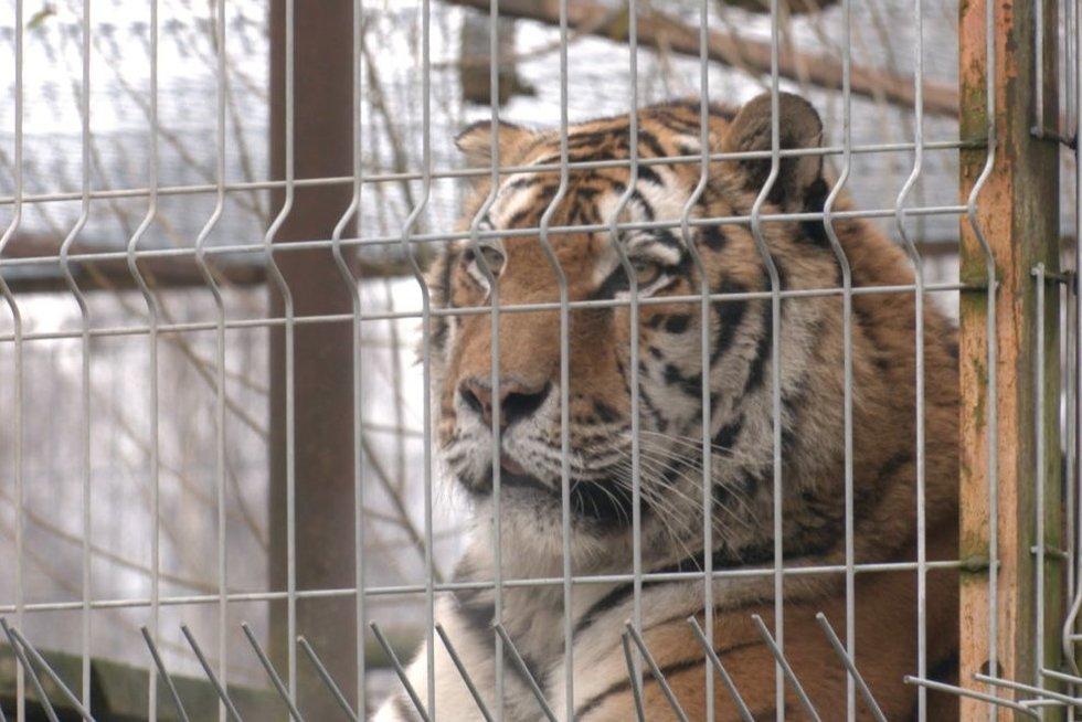 Klaipėdos zoologijos sodui teks rinktis: gerinti sąlygas gyvūnams arba užsidaryti (nuotr. stop kadras)