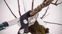 Medžiai žiemą (Nuotr. valstietis.lt)