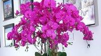 Orchidėja (nuotr. 123rf.com)