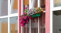 Gėlėmis papuošti vilniečių balkonai (nuotr. Tv3.lt/Ruslano Kondratjevo)
