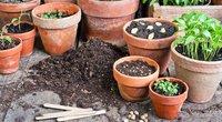 Augalų sodinimas (nuotr. Shutterstock.com)