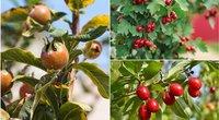 Pasodinkite šiuos augalus savo kieme (nuotr. Shutterstock.com)