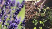 Nepamirškite sode atlikti būtinų darbų (tv3.lt fotomontažas)