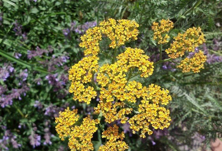Šie augalai nebijo sausros (Geltonaskarutis.lt nuotr.)