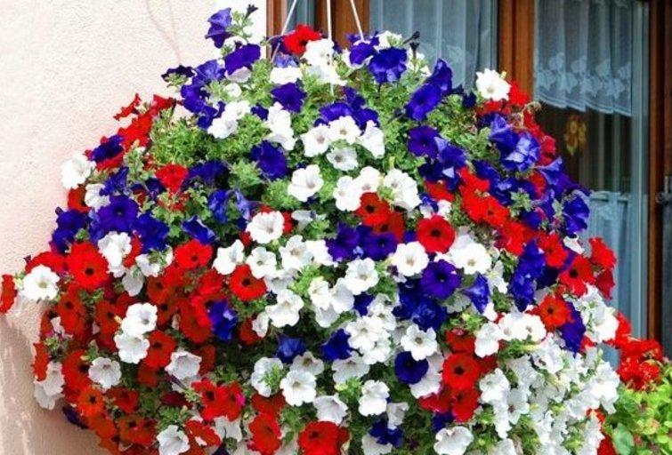 Petunijos balkone ir terasoje (nuotr. pinterest.com)