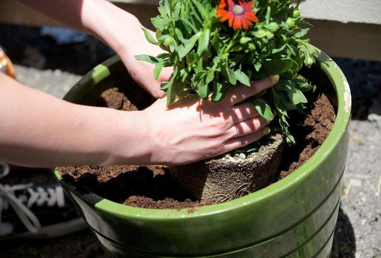 Gėlių sodinimas (nuotr. 123rf.com)