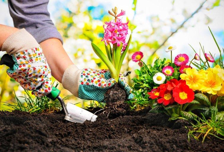 Sodo darbai  (nuotr. Shutterstock.com)