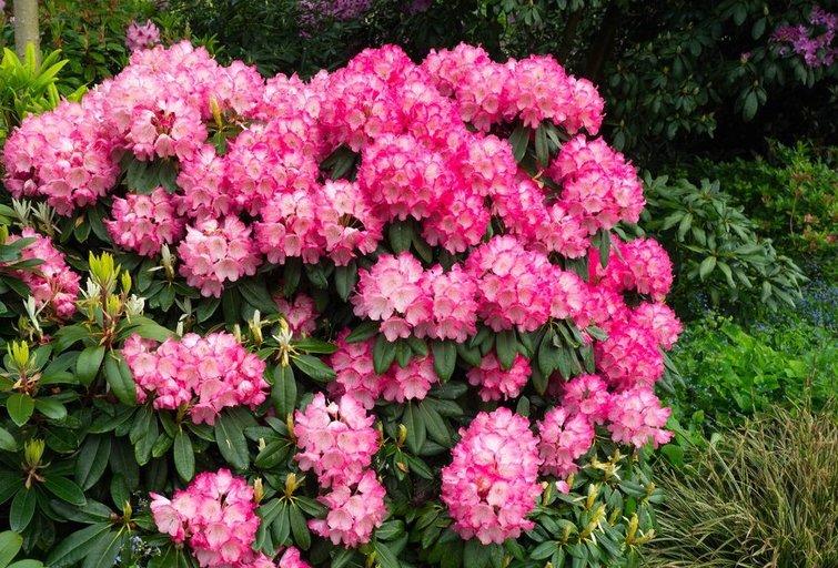 Gėlių žydėjimas  (nuotr. 123rf.com)