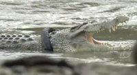Krokodilas (nuotr. stop kadras)
