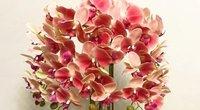 Orchidėja  (nuotr. YouTube)