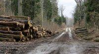 Miško kirtimas (Kęstutis Vanagas/Fotobankas)