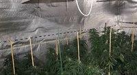 Išaiškinta kruopščiai slėpta galimai narkotinių medžiagų auginimo ir ruošimo laboratorija