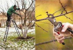 Auksiniai sodo patarimai iš eksperto lūpų: nekartokite šių medžių priežiūros klaidų