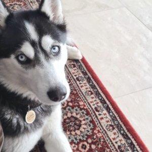 Siūlo 3 tūkst. eurų atlygį: mįslingomis aplinkybėmis dingo šuo