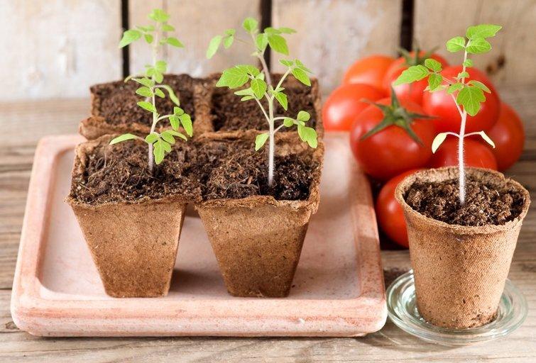 Daržovių sėja  (nuotr. Shutterstock.com)