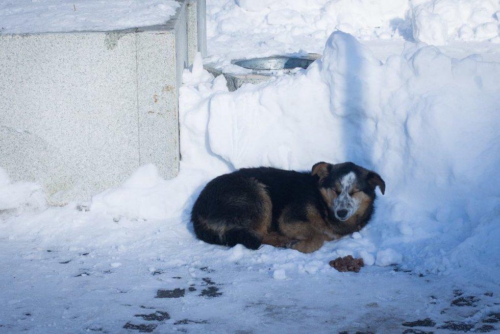 Gyvūnai nukenčia nuo šalčio