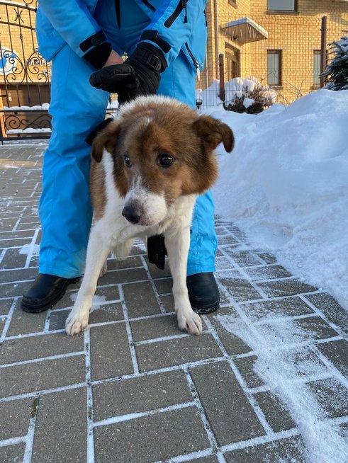 Sušalęs šuo