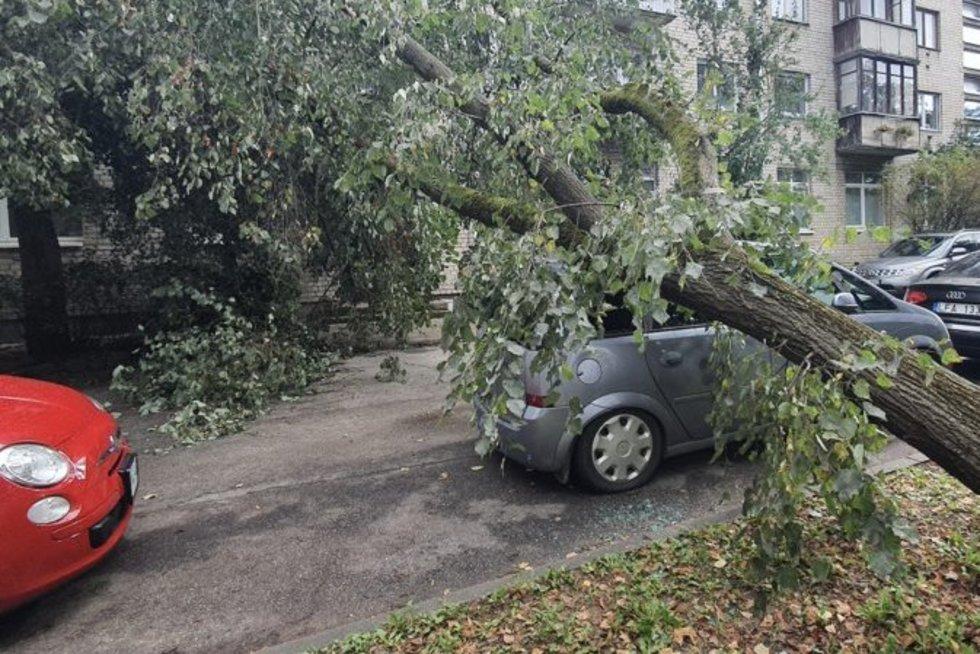 Ant automobilio užvirto medis (nuotr. Broniaus Jablonsko)