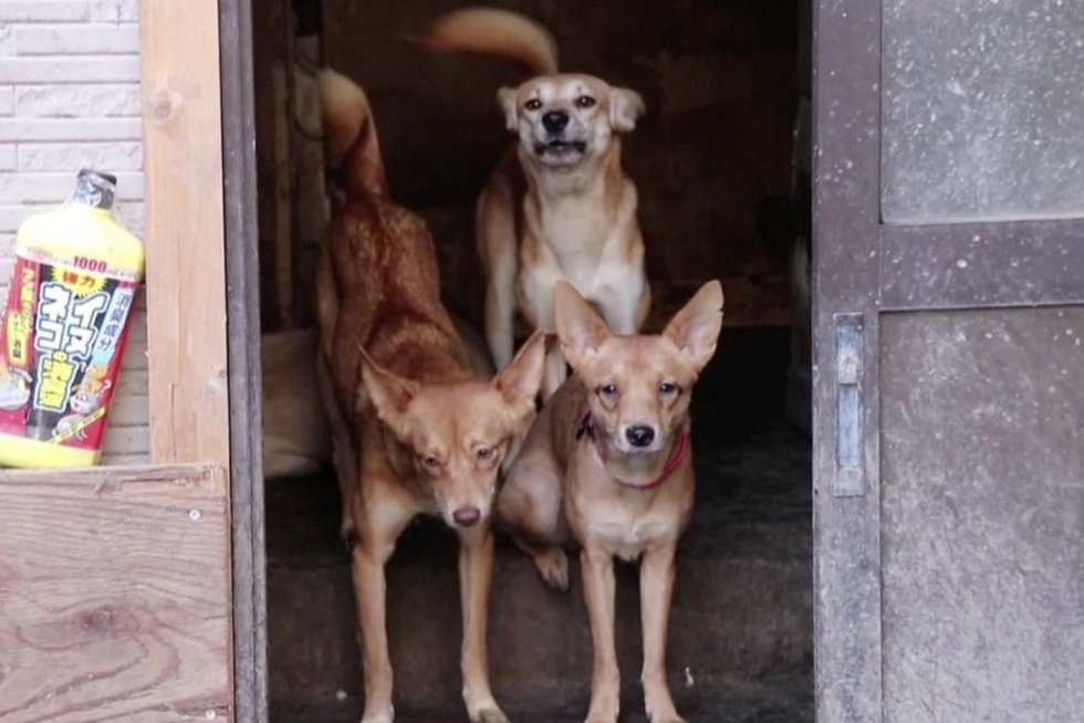 Šunys (nuotr. stop kadras)