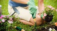 Gėlių sodinimas (nuotr. Shutterstock.com)