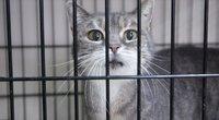 Katinas. Asociatyvi nuotrauka (nuotr. Tv3.lt/Ruslano Kondratjevo)