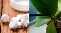 Orchidėjai padės 1 tabletė (nuotr. 123rf.com)