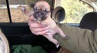 Gyvūnų gelbėjimo savanorių karas su šunų veisyklomis tęsiasi  (nuotr. stop kadras)