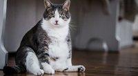 Katė (nuotr. 123rf.com)