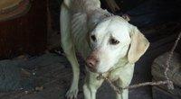 Panevėžio krašte šeimininko badu marinto šuns išsigando net ir atvykę gyvūnų gelbėtojai (nuotr. TV3)