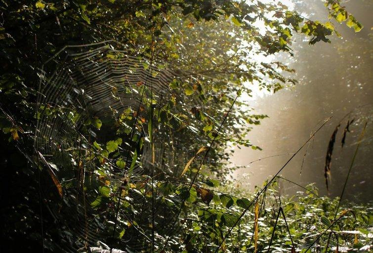 Miškas (nuotr. Fotolia.com)