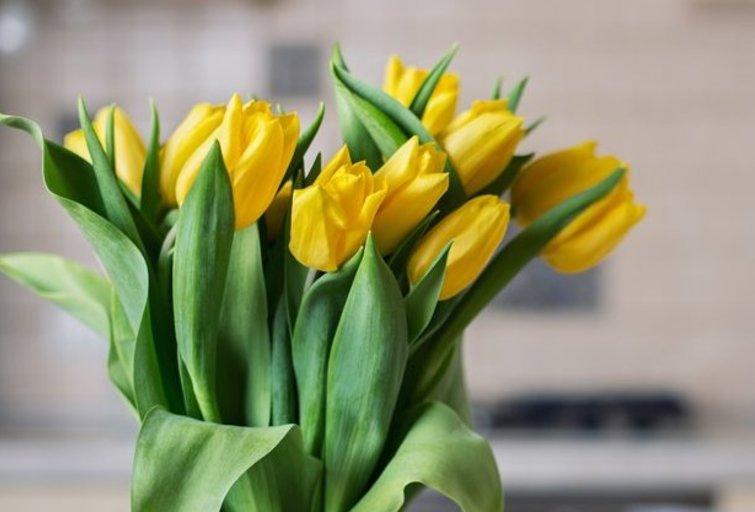 Tulpės  (nuotr. Shutterstock.com)