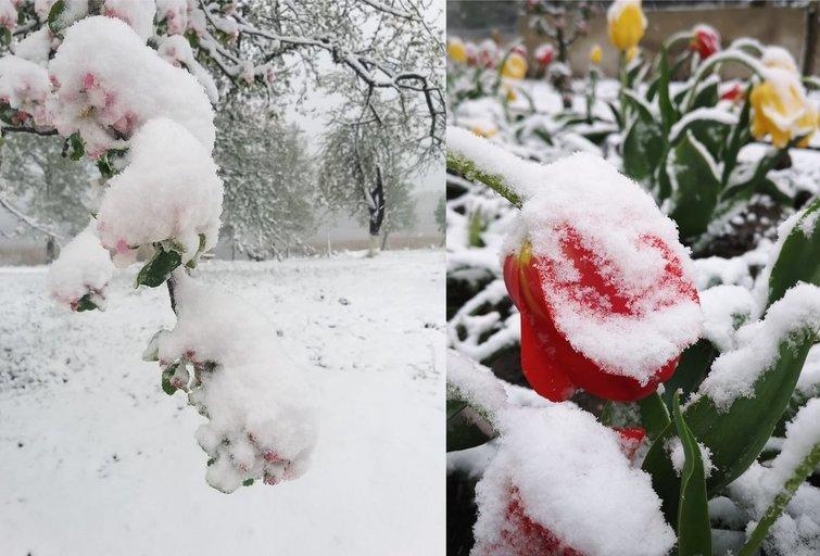 """Šalčiai (nuotr. Orai ir klimatas Lietuvoje/""""Facebook"""")"""