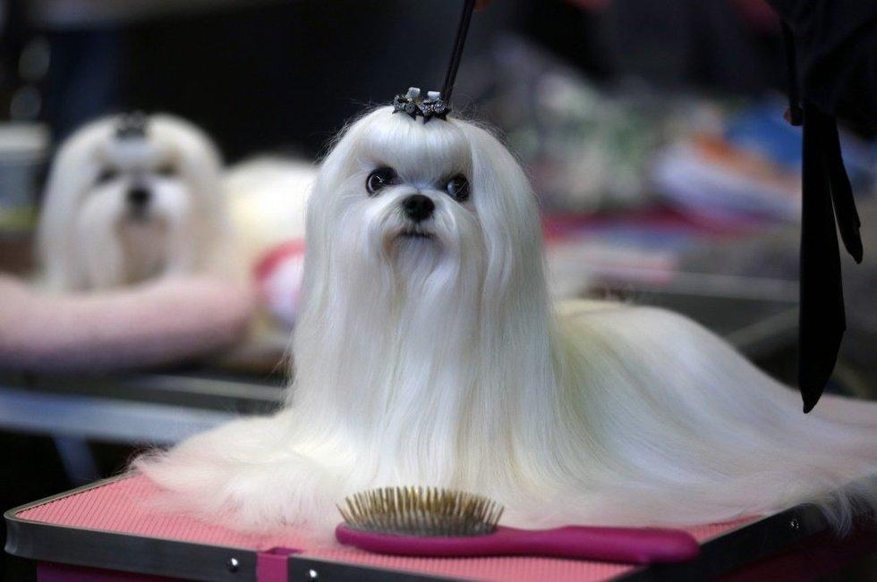 Šunys – geriausi žmogaus draugai (nuotr. SCANPIX)