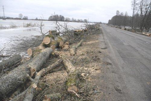 Ruošiantis parengiamiesiems užliejamo kelio Šilutė - Rusnė ruožo rekonstrukcijos ir estakados statybos darbams, buvo iškirsti visi šalia kelio augę 288 medžiai (nuotr. Šilutės naujienos)