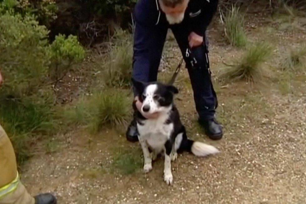 Išgelbėtas šuo (nuotr. stop kadras)
