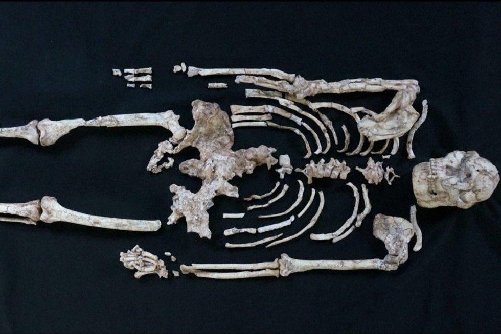 Tiria turimus australopitekų griaučius: tai padės sužinoti, kaip atrsirado žmonės (nuotr. stop kadras)
