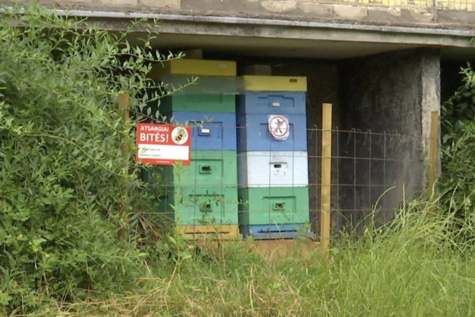 Vilniuje po daugiabučių langais užsiveisė bičių, bet sukilo gyventojai (nuotr. stop kadras)