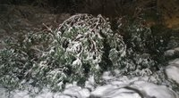 Nelaimės vieta Vingio parke (nuotr. Broniaus Jablonsko)
