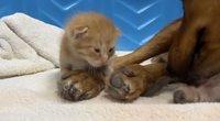 Kačiukas (nuotr. stop kadras)