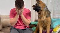 Nufilmavo šuns reakciją į šeimininko ašaras: inkštė ir kraipė galvą