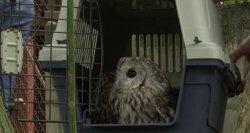 Nesusipratimas Klaipėdos zoologijos sode: grąžino konfiskuotas pelėdas – dvi nugaišo
