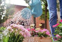 Atskleidė gėles, kurių laistyti beveik nereikia: verta užsirašyti