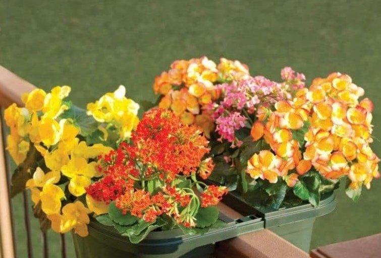 Gėlės balkone (nuotr. pinterest.com)