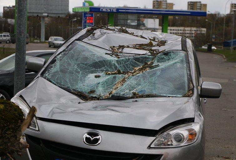 """Ant automobilio """"Mazda"""" užvirto medis nuotr. Broniaus Jablonsko"""